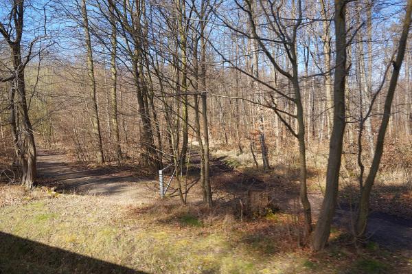 Waldstück an der Strecke