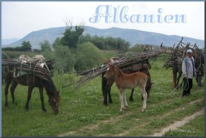 Albanien 50