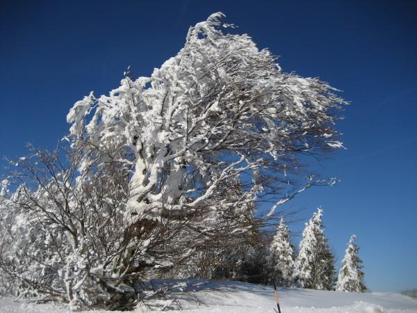 Schnee 18.02.09 008.jpg