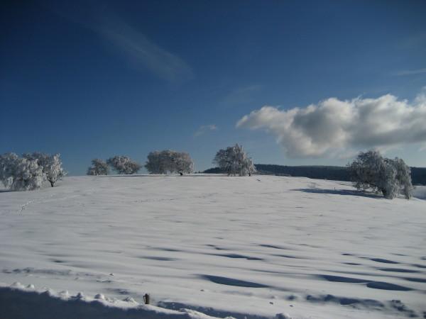 Schnee 18.02.09 009.jpg