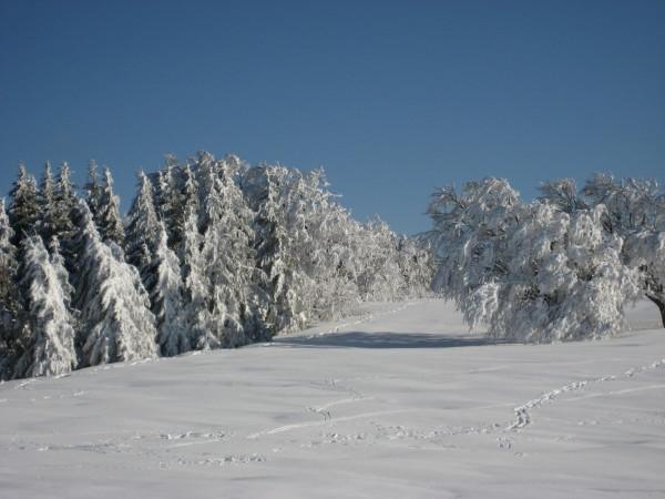 Schnee 18.02.09 010.jpg