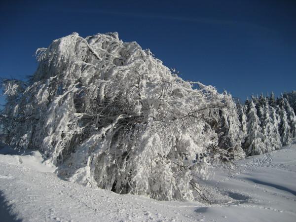 Schnee 18.02.09 018.jpg