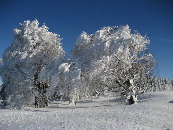 Schnee 18.02.09 021.jpg