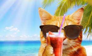 Katze mit Sonnenbrille vor einem Strand mit Cocktail in der Pfote