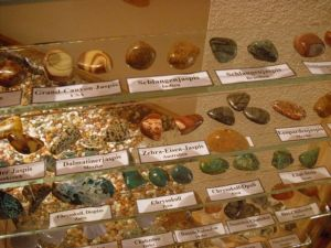 Pilzmuseum