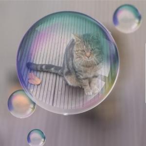 Einsame Katze.jpg