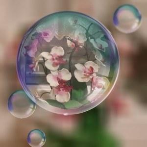 Orchidee 01.jpg