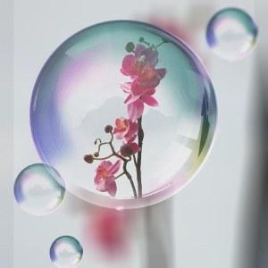 Orchidee 02.jpg