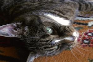 Wie lange dauert trauer um katze