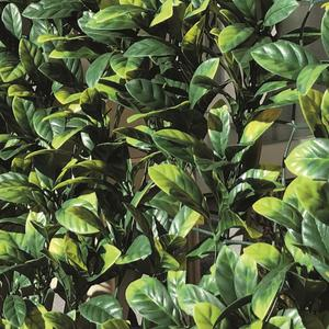 Divy 3D Plus Laurus Synthetic hedge with dense laurel-like foliage