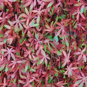 Divy 3D X-Tens Red Acer  Synthetic hedge with red maple leaves on adaptable trellis