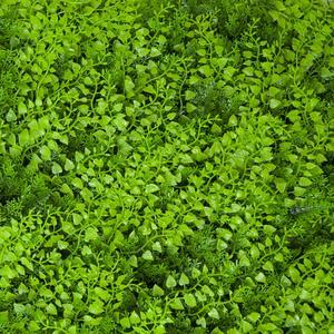 Divy 3D Panel Fern Siepe sintetica componibile con foglie di felce