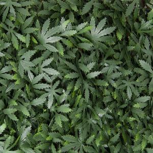 Divy 3D X-Tens Acer Palmatum Siepe sintetica su traliccio in salice con foglie di acero