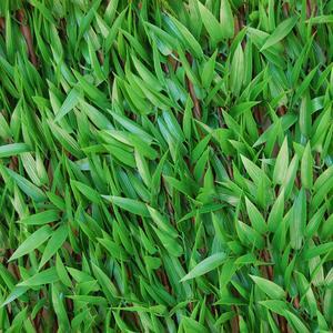 Divy 3D X-Tens Bamboo Siepe sintetica su traliccio in salice con foglie di bamboo