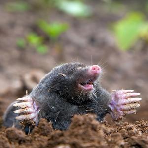 S38 mole-net Underground net against moles