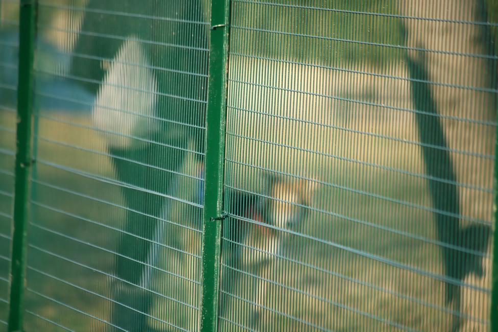Recinzione Per Cani Giardino.Esaplax 50x25 La Rete Per I Cani Vendita Online Su Fenceshop Eu