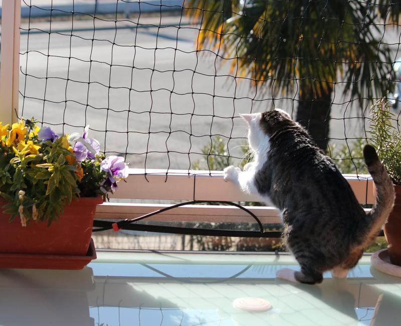 Recinzioni Antifuga Gatti.Rete Protezione Gatti E Volatili La Rete Economica E Di