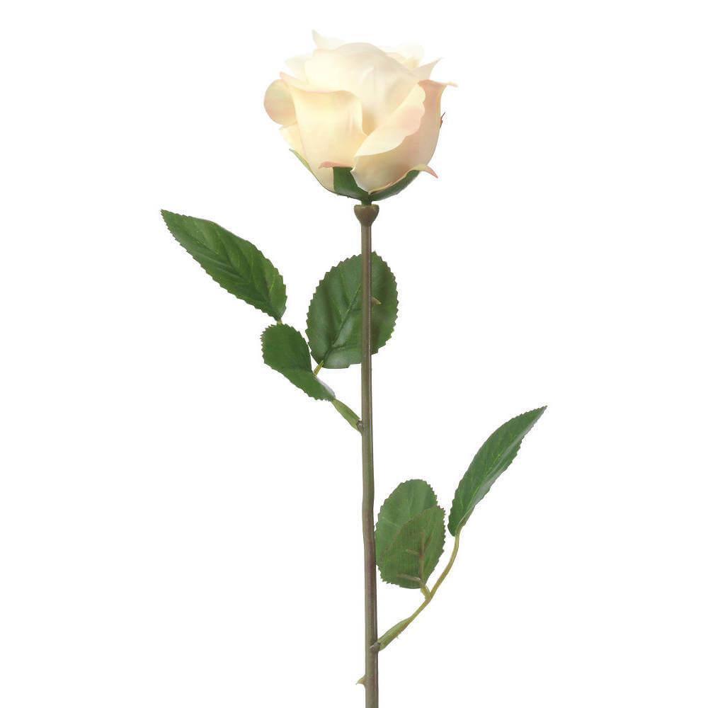 vit ros betydelse begravning