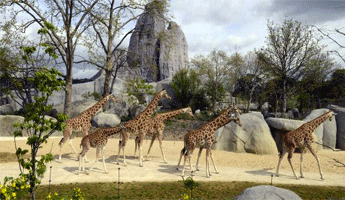 Zoo de Vincennes, arrondissement paris, paris arrondissement, arrondissements paris