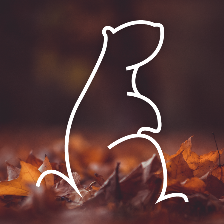 Marmotte-automne-ACDV