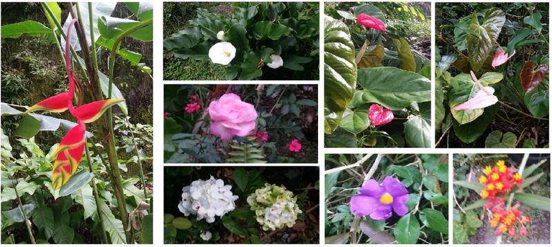 Fleurs de la cour