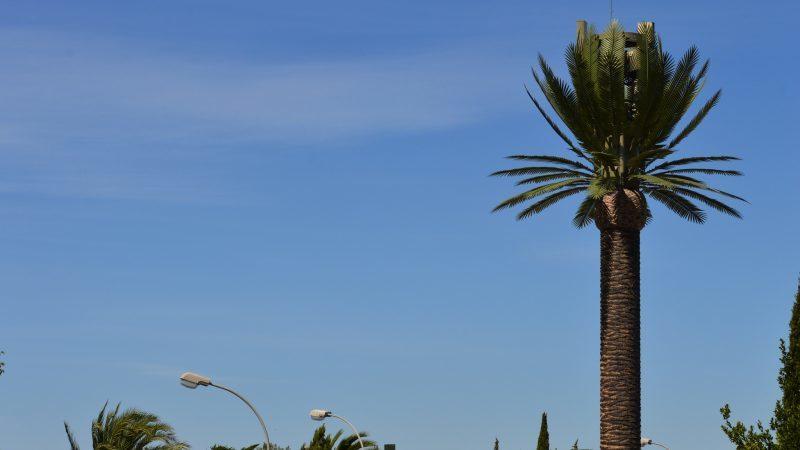 Pylone palmier