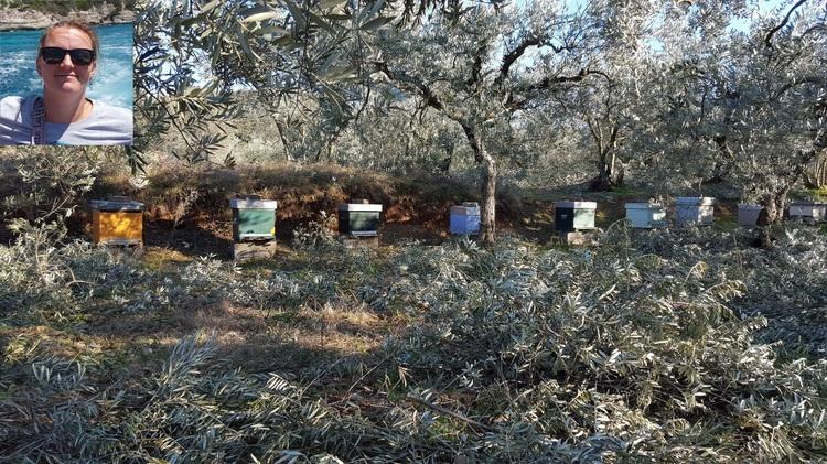 L'apiculture au féminin : Sauvegarde de l'abeille noire