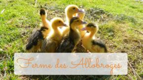 La Ferme des Allobroges : Développer l'accueil du public à la ferme...