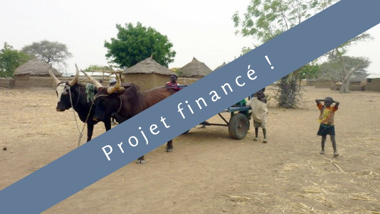Oxen and a plow : Let's help a farmer and his family in Cameroon