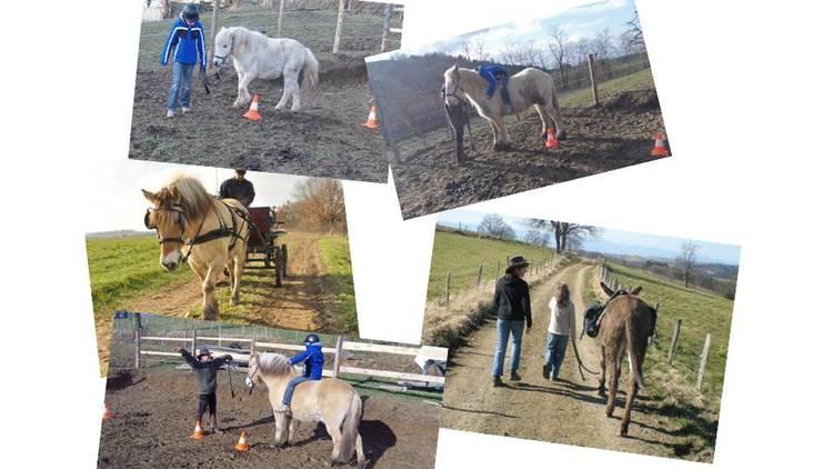 Un cheval pour le handicap  : Stage destiné aux enfants en situation de handicap