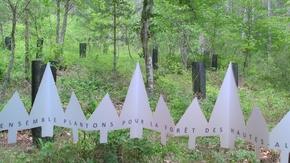 Plantons des Arbres : Ensemble, Plantons pour la forêt des Hautes Alpes