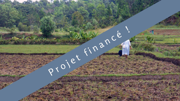 Cultiver mieux pour acheter moins : A Madagascar : une riziculture améliorée (SRA) !