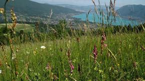 Sauvegarder les paysages Lac d'Annecy : Par l'acquisition de terres agricoles