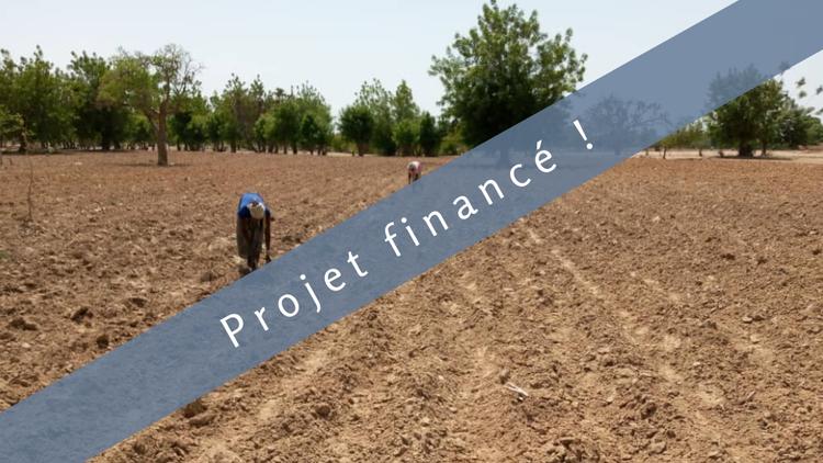 Labourer la terre de demain : Des boeufs pour labourer la terre