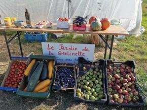 Serre à tomates pédagogique : Au Jardin de la Grelinette, la tomate est un fruit