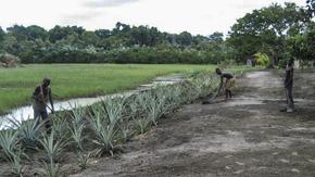 Les parents  du  marais : Des pygmées chassés de leur territoire