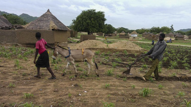 A legacy for the future : Conservation agriculture: the benefit of the soil