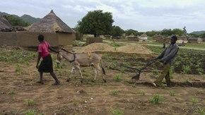 Un héritage pour l'avenir  : L'agriculture de conservation au bénéfice des sols