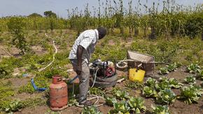 Le temps des moissons au Burkina Faso : Un projet d'agriculture pour partager les récoltes