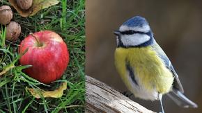 Atout nature : produire autrement : Un verger en totale harmonie avec la nature