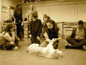 FORMATION A LA MEDIATION ANIMALE  : Les animaux soignent les maux