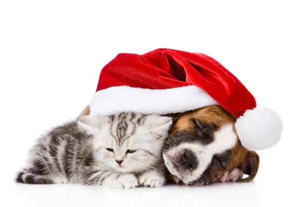 Chiens chats noel cadeaux