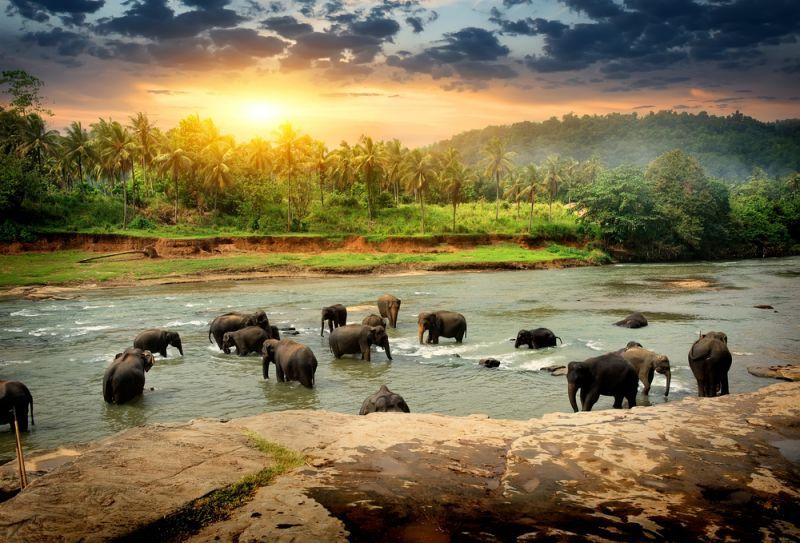 Sommer auf Sri Lanka
