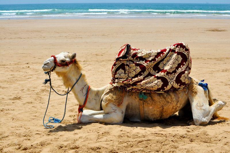 November in Agadir: Jetzt buchen und Rabatt sichern