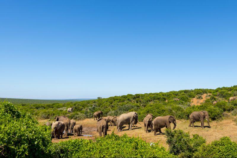 Luxuslodge im privaten Wildreservat