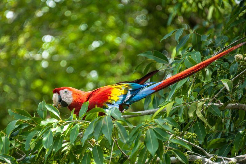 Urlaub im Regenwald-Hotel in Panama