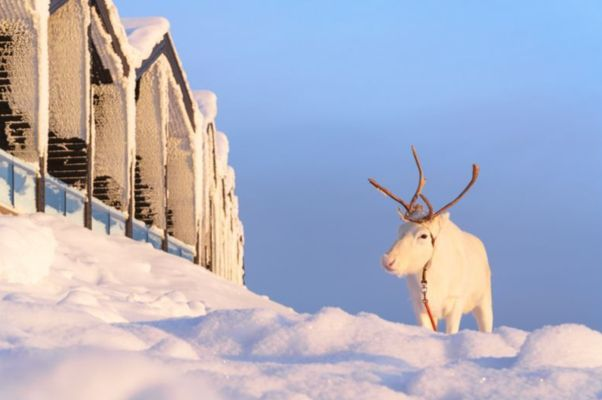 Eine Woche Lappland im Designhotel