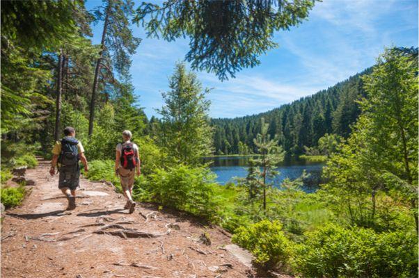 Wanderurlaub im Schwarzwald