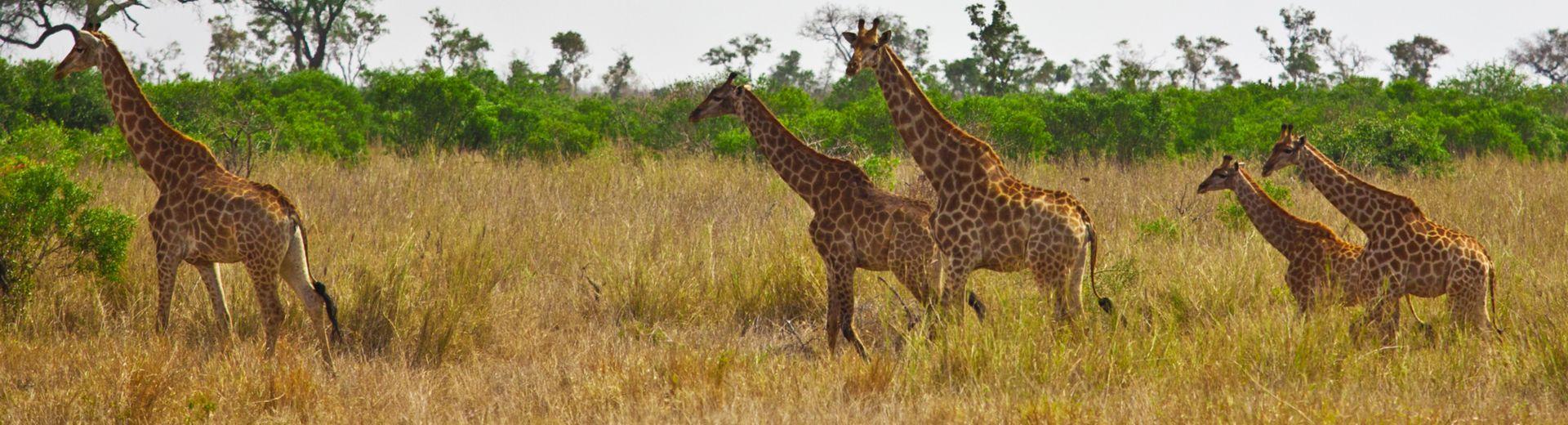 AIDAmira: Südafrika und Namibia entdecken
