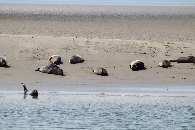 Op zoek naar zeehonden